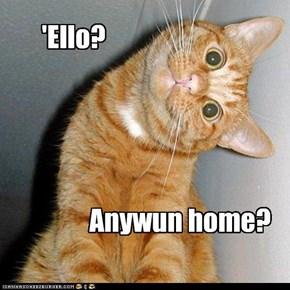 'Ello?