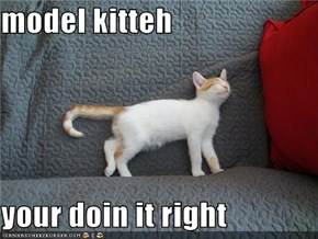 model kitteh  your doin it right