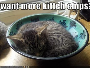 want more kitteh chips??