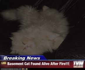 Breaking News - Basement Cat Found Alive After Fire!!!