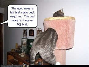 The good news is his test came back negative.  The bad news is it was an IQ test.