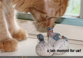 u teh mommi for us?