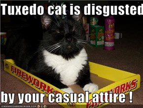 Tuxedo cat is disgusted                                         by your casual attire !