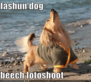 fashun dog  beech fotoshoot