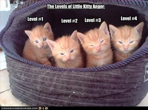The Levels of Little Kitty Anger: