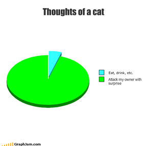 Thoughts of a cat