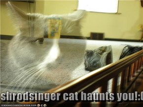 shrodsinger cat haunts you!:(