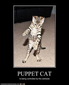 PUPPET CAT