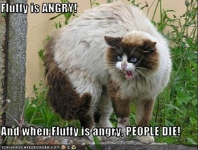 Fluffy is ANGRY!  And when Fluffy is angry, PEOPLE DIE!
