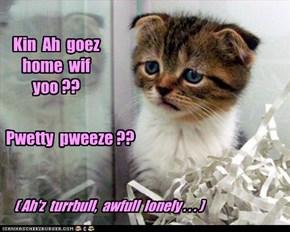 Kin  Ah  goez  home  wif  yoo ??