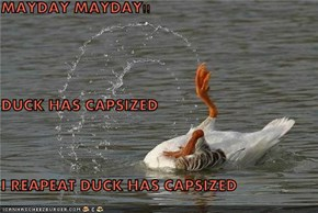 MAYDAY MAYDAY!! DUCK HAS CAPSIZED I REAPEAT DUCK HAS CAPSIZED