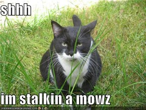 shhh  im stalkin a mowz