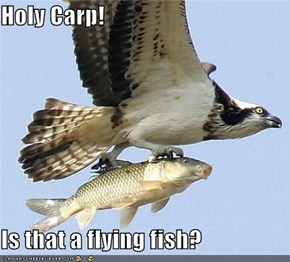Holy Carp!  Is that a flying fish?