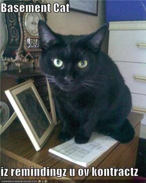 Basement Cat  iz remindingz u ov kontractz