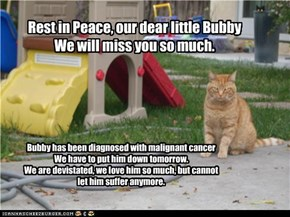 Rest in Peace, our dear little Bubby We will miss you so much.