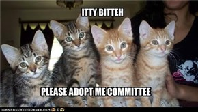 ITTY BITTEH PLEASE ADOPT ME COMMITTEE