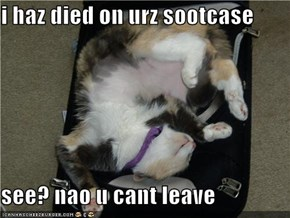 i haz died on urz sootcase  see? nao u cant leave