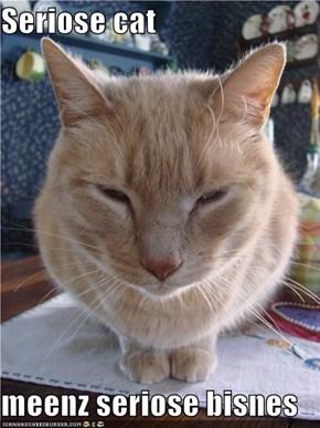 Seriose cat  meenz seriose bisnes