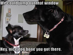 We could jump out that window  Hey, nice dog bone you got there.