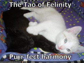 The Tao of Felinity  Purr-fect harmony