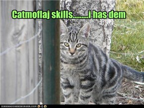 Catmoflaj skills.........i has dem