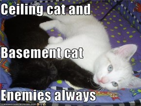 Ceiling cat and  Basement cat Enemies always