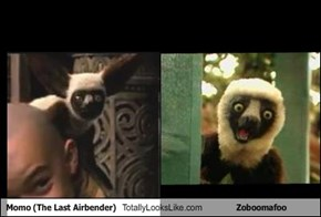 Momo (The Last Airbender) Totally Looks Like Zoboomafoo