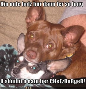 Kin onle holz hur daun fer so long     U shudnt a eatn her CHeEzBuRgeR!