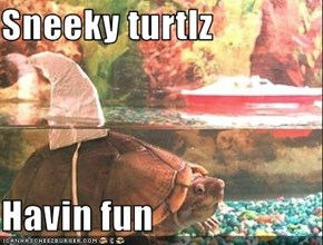 Sneeky turtlz  Havin fun