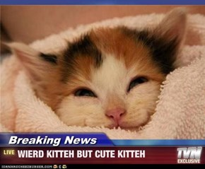 Breaking News - WIERD KITTEH BUT CUTE KITTEH