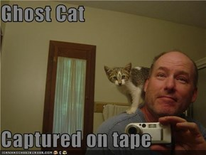 Ghost Cat  Captured on tape