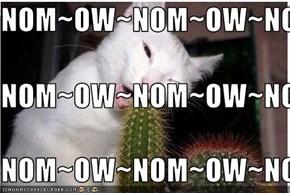 NOM~OW~NOM~OW~NOM~OW NOM~OW~NOM~OW~NOM~OW NOM~OW~NOM~OW~NOM~OW
