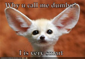 Why u call me dumbo?  I is very smart