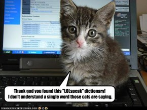 Kitteh is grateful for LOLspeak dictionary