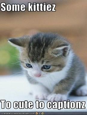 Some kittiez  To cute to captionz