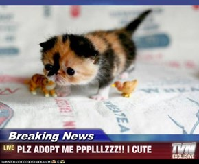 Breaking News - PLZ ADOPT ME PPPLLLZZZ!! I CUTE
