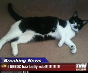 Breaking News - I NEEDZ haz belly rub!!!!!!!!!!!!