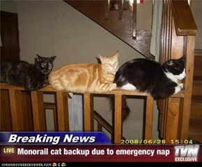 Breaking News - Monorail cat backup due to emergency nap