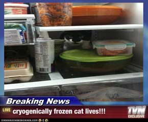 Breaking News - cryogenically frozen cat lives!!!