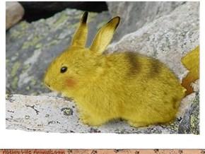 Pika-Bunny