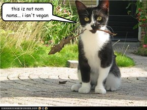 this iz not nom noms... i isn't vegan