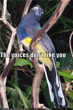 The voices don't like you