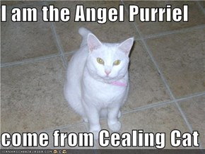 I am the Angel Purriel  come from Cealing Cat