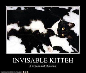 INVISABLE KITTEH