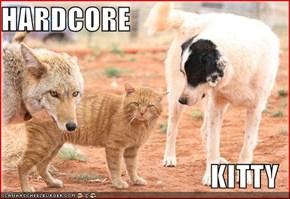 HARDCORE  KITTY