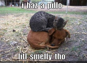 i  haz  a  pillo  litl  smelly  tho