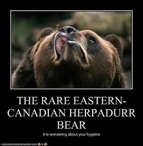 THE RARE EASTERN-CANADIAN HERPADURR BEAR