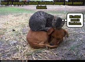 Aftur 45 atemptz to dislodj teh kitteh, Ginger finali admitz defeet.