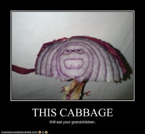 THIS CABBAGE
