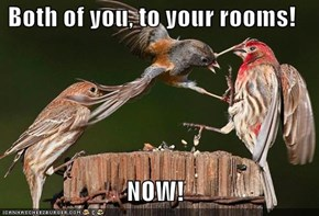 Both of you, to your rooms!  NOW!